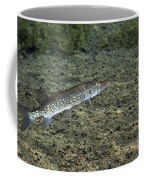 A Chain Pickerel Wimming The River Coffee Mug by Terry Moore