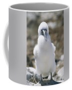 A Chick Blue Footed Booby Sits Coffee Mug by Gina Martin