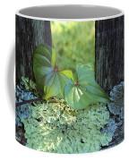A Cinnamon Vine And Foliose Lichen Coffee Mug