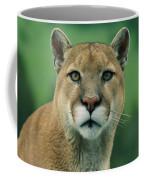 A Close View Of A Captive Male Mountain Coffee Mug
