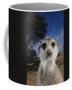A Close View Of An Adult Meerkat Coffee Mug