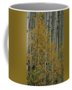 A Close View Of Quaking Aspen Trees Coffee Mug