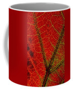 A Close View Of The Veins Of A Colorful Coffee Mug