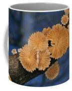 A Common Split Gill Mushrooms Sit Coffee Mug by Darlyne A. Murawski