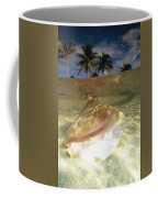 A Conch Shell Rests Beneath The Clear Coffee Mug