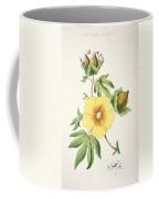 A Cotton Plant Coffee Mug