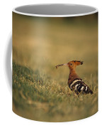 A Eurasian Hoopoe With An Insect Coffee Mug