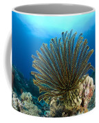 A Feather Star With Arms Extended Coffee Mug