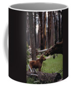 A Female Moose Nuzzles Her  Young Coffee Mug