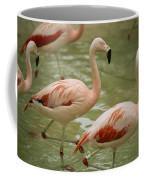 A Flock Of Chilean Flamingos Wading Coffee Mug