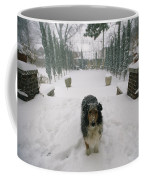 A Forlorn And Snow-dusted Sheltie Coffee Mug