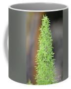 A Foxtail Fern Closeup Coffee Mug