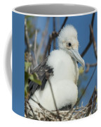 A Frigatebird Sitting In A Nest Coffee Mug
