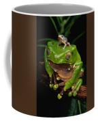 A Frog Phylomedusa Bicolor Perched Coffee Mug
