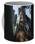 A Giant Redwood In The Mariposa Grove Coffee Mug