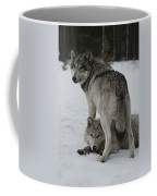 A Gray Wolf, Canis Lupus, Stands Coffee Mug