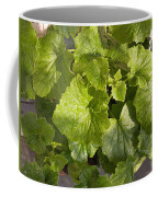 A Green Leafy Vegetable Plant After Watering In Bright Sunrise Coffee Mug