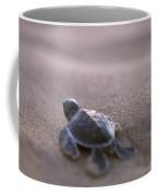 A Green Sea Turtle Hatchling Races Coffee Mug