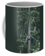 A Grizzly Bear Clings To A Fir Tree Coffee Mug