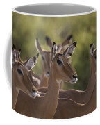 A Group Of Alert Impalas In Samburu Coffee Mug