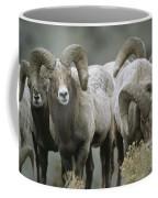 A Group Of Bighorn Sheep Rams Coffee Mug