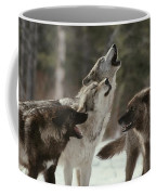 A Group Of Gray Wolves, Canis Lupus Coffee Mug