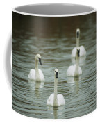 A Group Of Swans Swimming On A County Coffee Mug