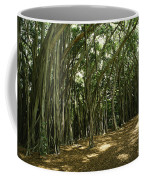 A Grove Of Banyan Trees Send Airborn Coffee Mug by Paul Damien