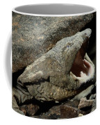 A Hellbender Salamander In Its Rocky Coffee Mug