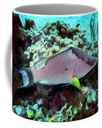 A Hogfish Swimming Above A Coral Reef Coffee Mug
