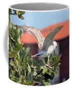 A Juvenile Herring Gull Coffee Mug