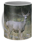A Large Antlered White-tailed Deer Coffee Mug