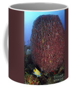 A Large Barrel Sponge With Queen Coffee Mug