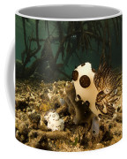 A Large Nudibranch Feeds On A Sponge Coffee Mug by Tim Laman