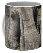 A Leopard And Cub Inside A Giant Baobab Coffee Mug