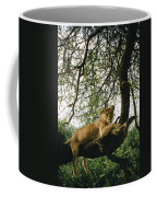 A Lion Panthera Leo Relaxes On A Tree Coffee Mug