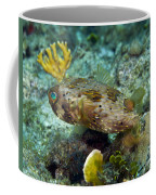 A Long-spined Porcupinefish, Key Largo Coffee Mug by Terry Moore