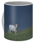 A Longhorn Steer, One Member Of A Small Coffee Mug