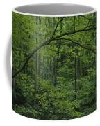 A Lush Green Eastern Woodland View.  An Coffee Mug