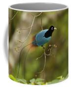 A Male Blue Bird Of Paradise Perched Coffee Mug by Tim Laman