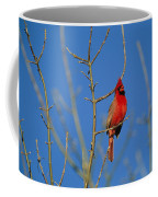 A Male Cardinal Sings In A Suburban Coffee Mug