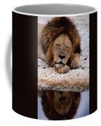 A Male Lion Panthera Leo Sleeps Coffee Mug