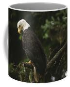 A Mature Bald Eagle Is Perched Atop Coffee Mug