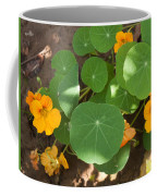 A Mix Of Orange Flowers And Round Green Leaves With Sun And Shadow Coffee Mug