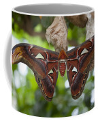 A Moth Clings To Its Cocoon Immediately Coffee Mug