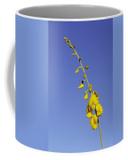 A New-holland Rattlepod, Crotalaria Coffee Mug by Jason Edwards