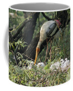 A Painted Stork Feeding Its Young At The Delhi Zoo Coffee Mug