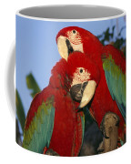 A Pair Of Captive Red-and-green Macaws Coffee Mug