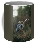 A Pair Of Great Blue Herons Stand Coffee Mug