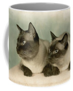 A Pair Of Siamese Cats Coffee Mug